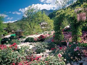 Blumen und Blütenpracht in Italien